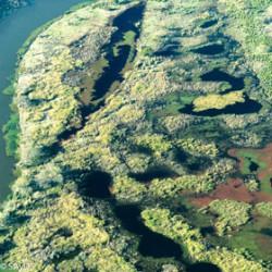El Delta del Paraná, un humedal protegido