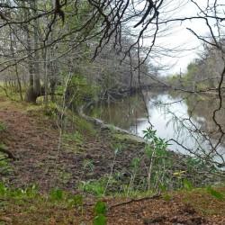 Humedales: avances para el manejo ambiental integral de la cuenca del río Luján