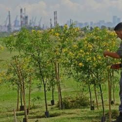 Un paso clave para transformar la ex CEAMSE de Villa Domínico en un parque ecológico