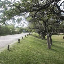 La Reseva Ecológica festeja sus 32 años con la plantación de 50 árboles