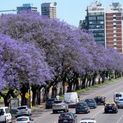 Hay más árboles en la Ciudad y sus copas cubren un 30% de la superficie porteña
