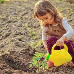 Una Ley para que el cuidado del ambiente sea responsabilidad de todos