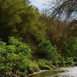 En medio del cemento: Isla verde, la reserva natural que impulsaron los vecinos de Morón