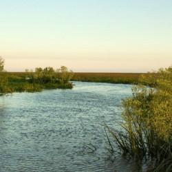 Siguen apareciendo islas en San Isidro: se formó la tercera en el Delta y la sumarán a la reserva protegida