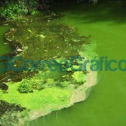 Cianobacterias: Ambiente continúa la campaña de control y monitoreo en el Río de la Plata