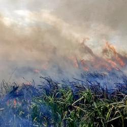 Ley de humedales: la ONU alertó por su conservación en Argentina y llamó a avanzar con la ley