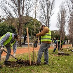 Plan de Forestación: la Ciudad plantará arriba de 16 mil árboles durante 2021